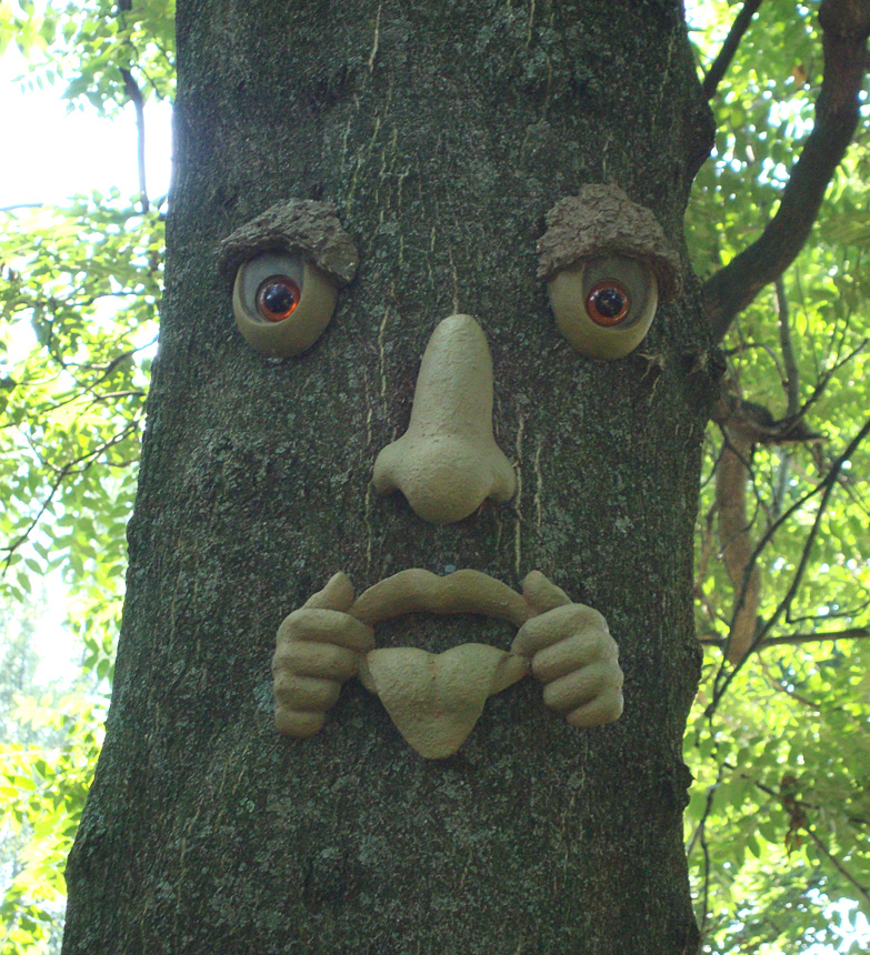 the tree face along the Sensory Trail of the Enchanted Forest