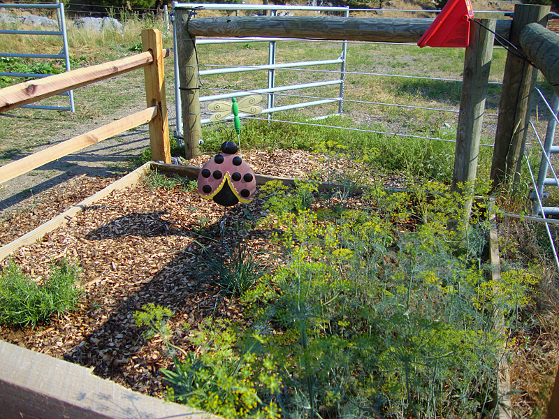 herb garden for student sensory stimulation
